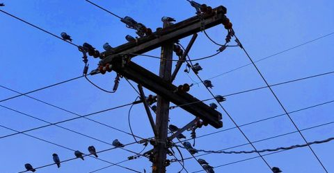 birds on a telegraph wire